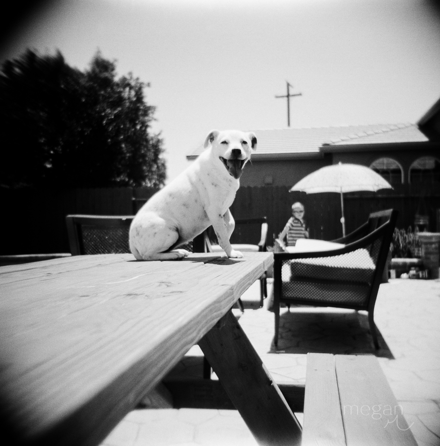 dog sits on picnic table in black and white film image