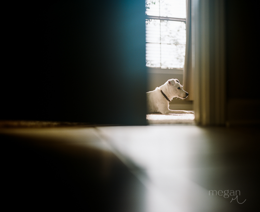 dog through open door in window light on portra 400 film