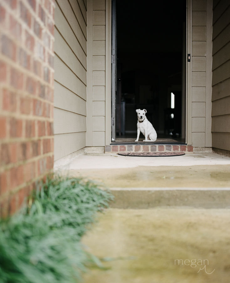 Dog framed in front doorway shot on portra 400 medium format film