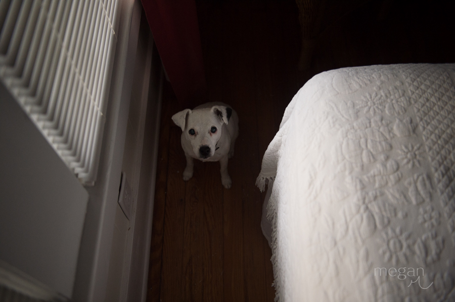 small white dog hides in pocket of shadow amongst late afternoon natural light
