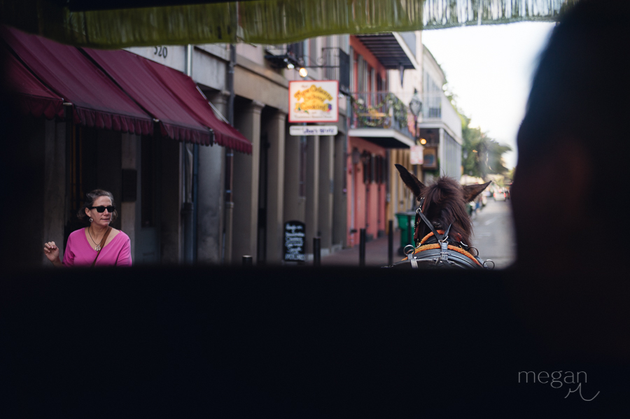 looking across the back of a mule from a carriage in the french quarter of new orleans