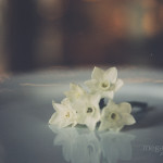 Paperwhites on portra 400 film by Megan Cieloha Photography