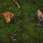 leaves on green grass and moss by megan cieloha