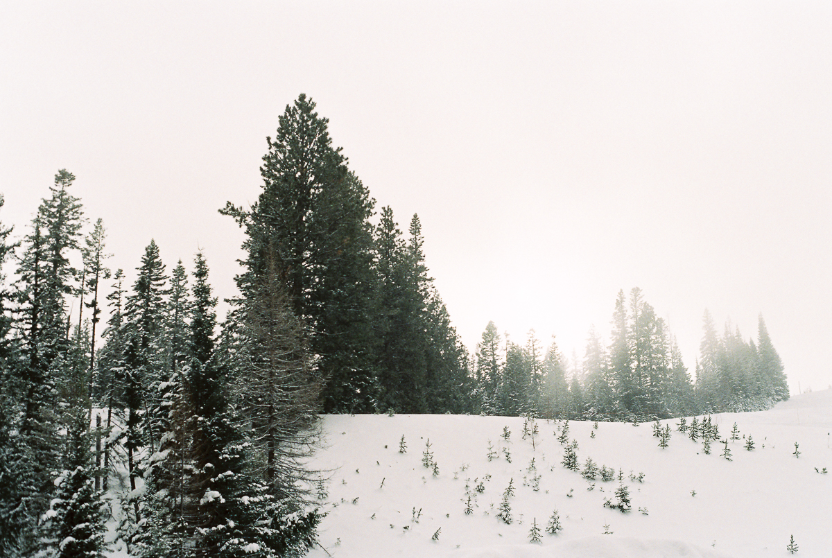 hillside with snow and trees on fuji super 800 by megan cieloha