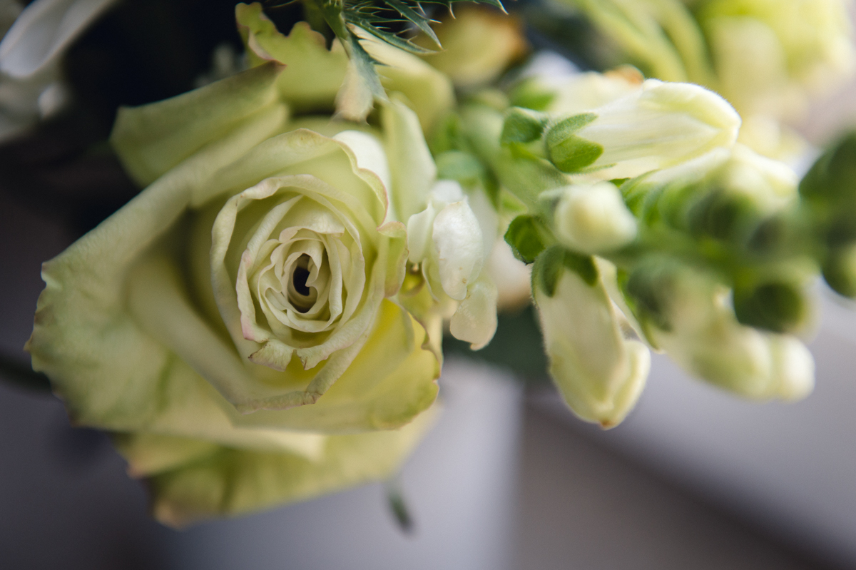 cream and light green flower photo by megan cieloha