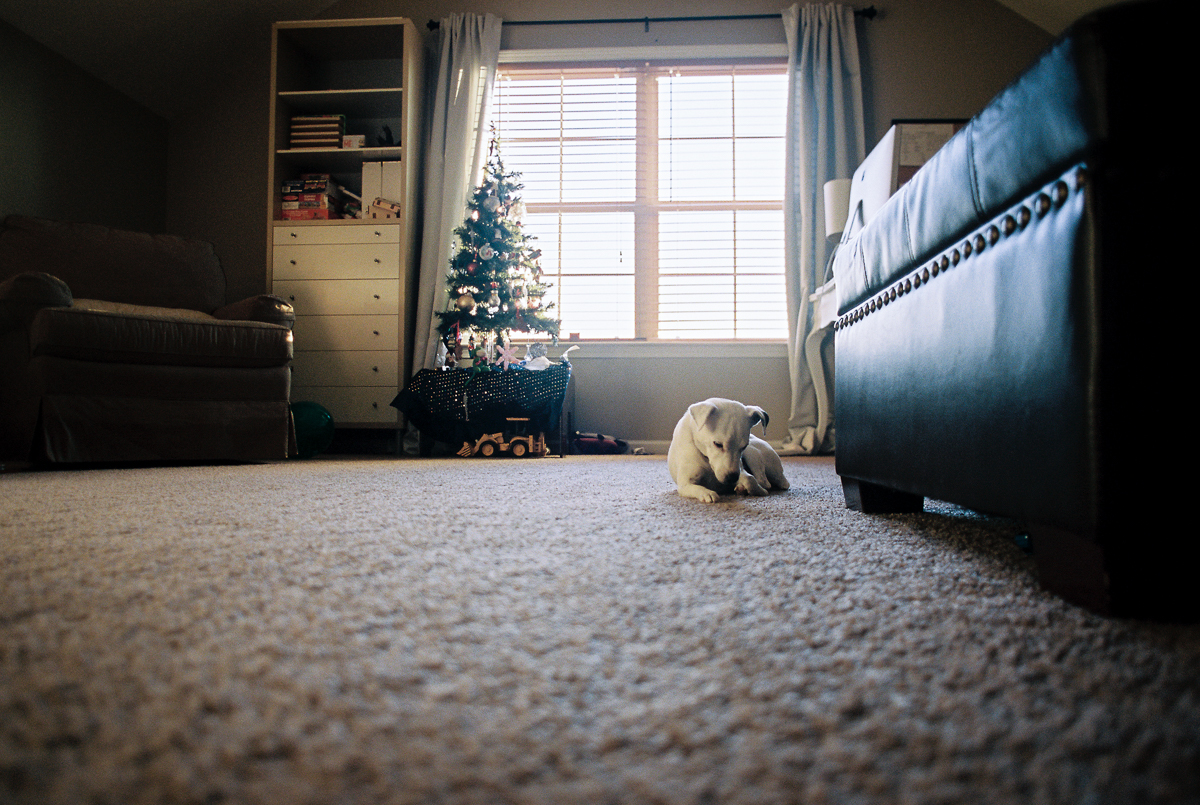 jack russell terrier dog laying on carpet in film photo by megan cieloha