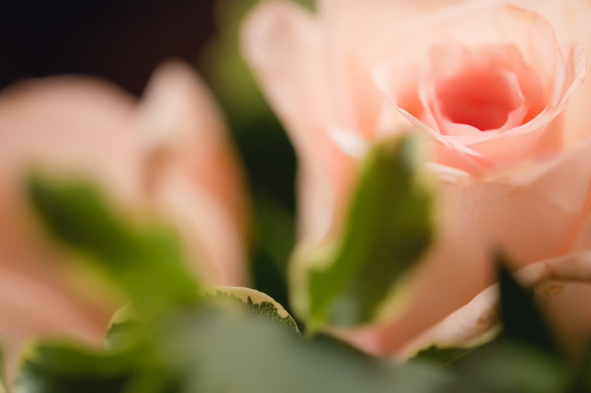 pink roses with greenery in soft focus by megan cieloha