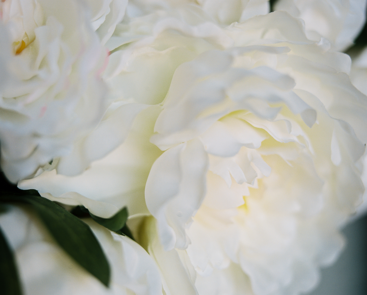 white peonies on portra 400 by megan cieloha
