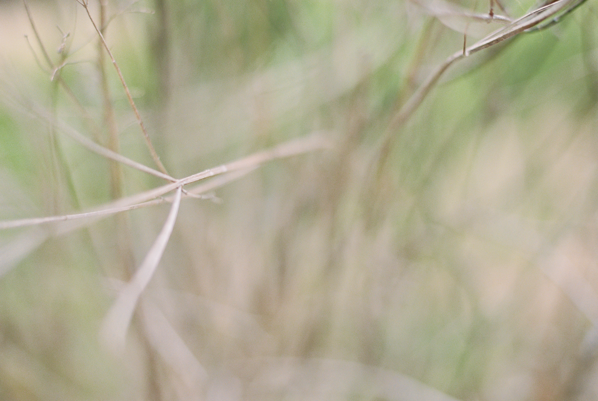 abstract twigs photographed on film by megan cieloha
