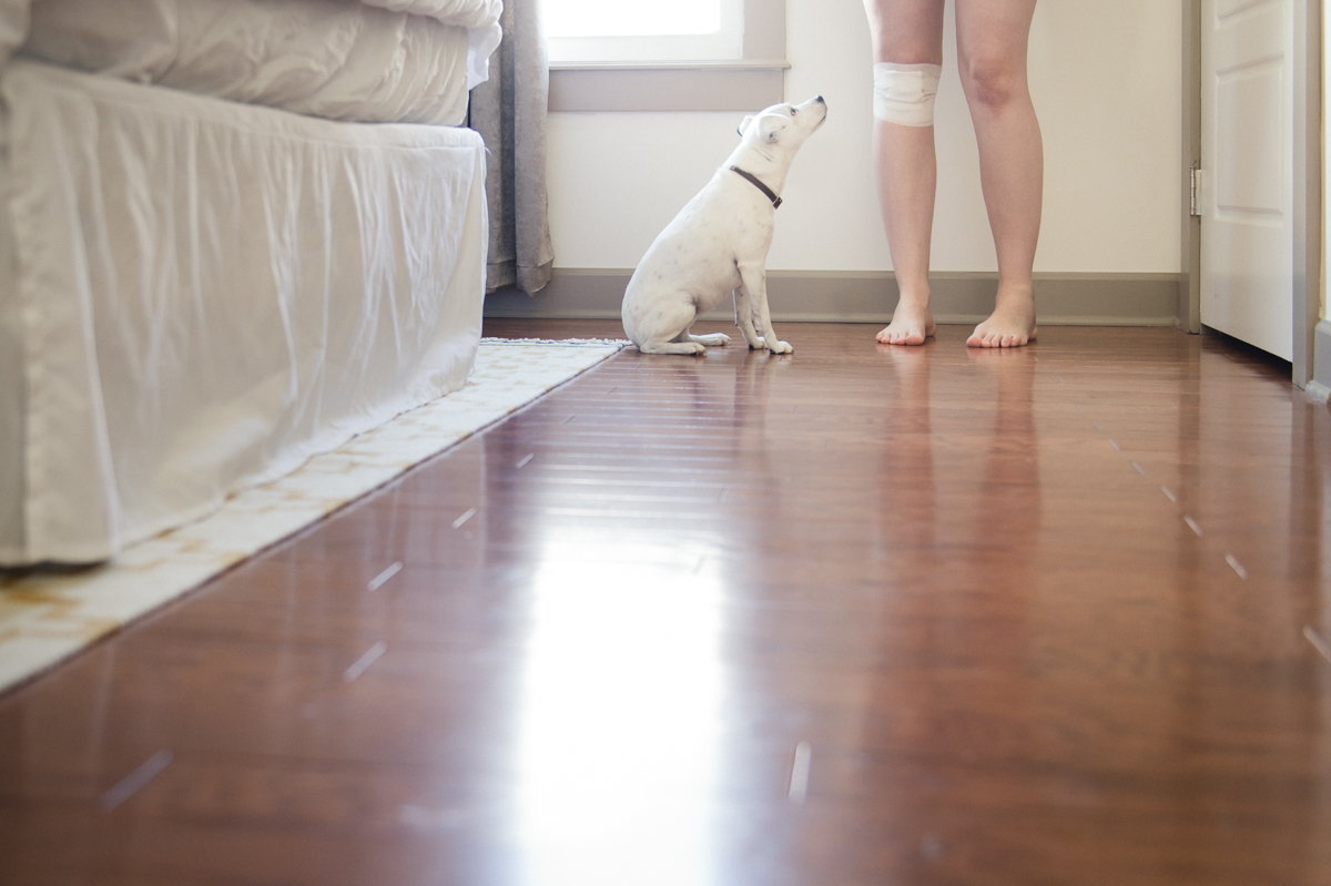 self portrait of legs with jack russell terrier in natural light by megan cieloha