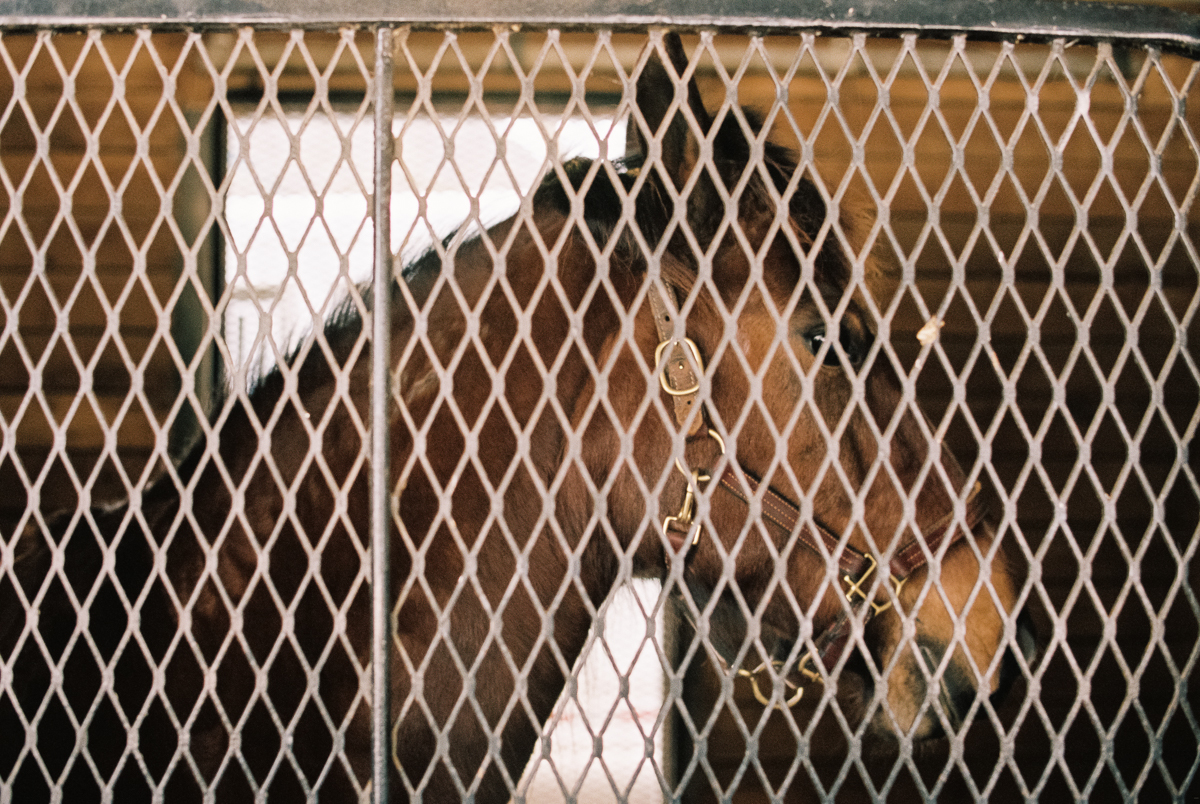 horse in stall at kentucky horse park portra 400 film image in natural light photo by megan cieloha