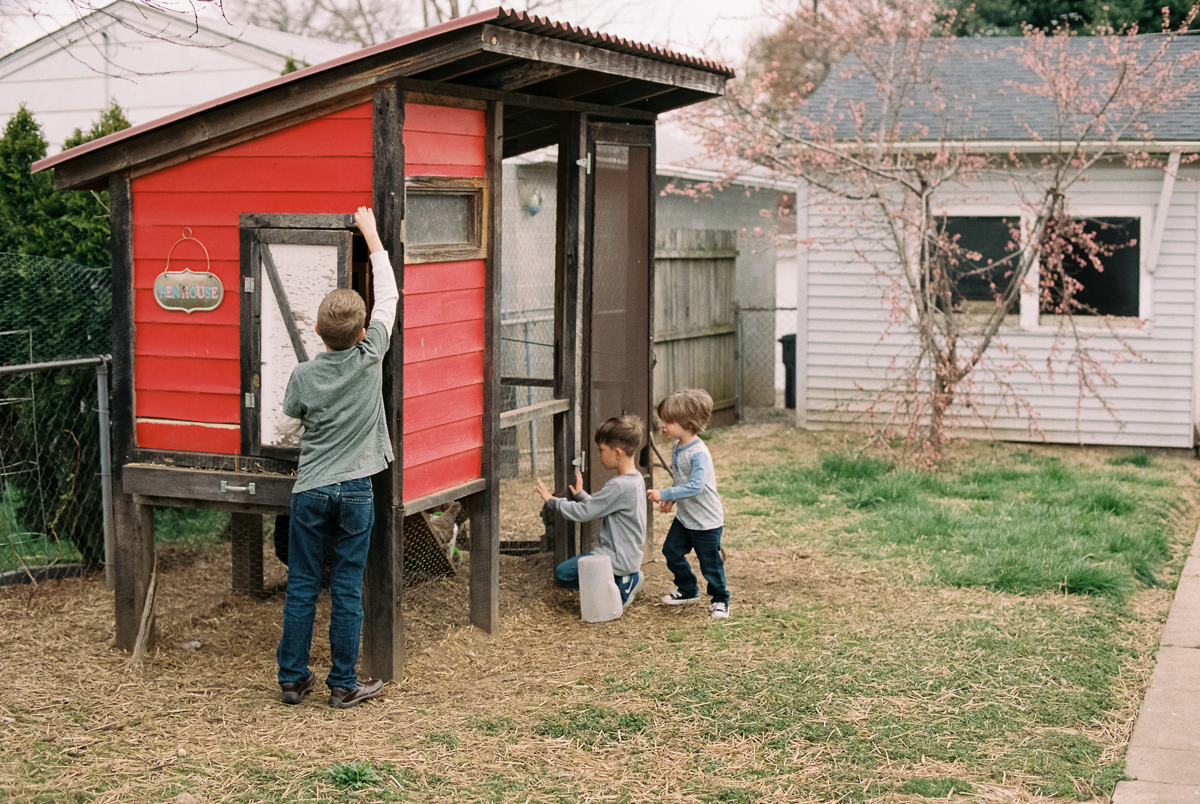 children explore chicken coop portra 400 film image in natural light photo by megan cieloha