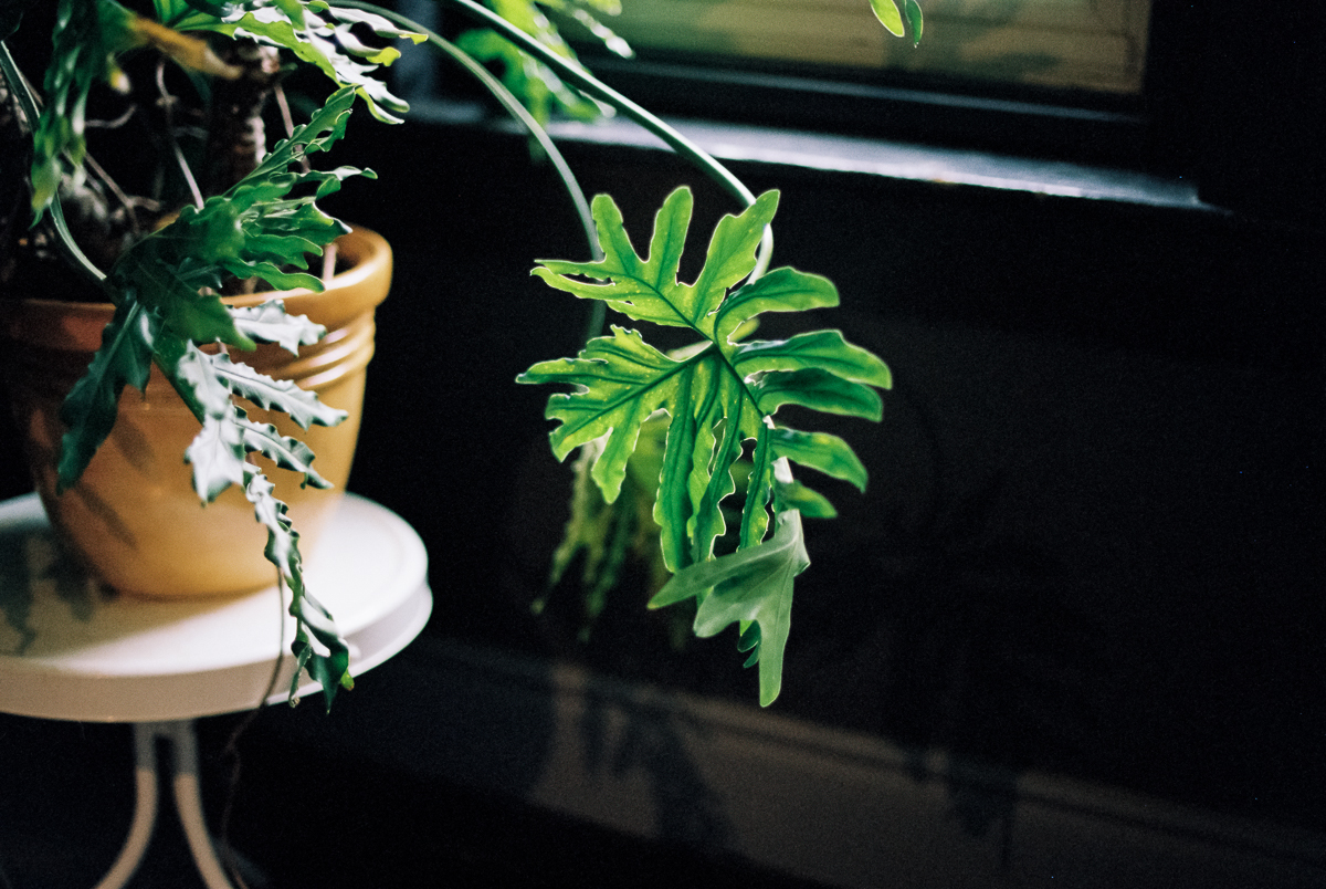 green plant next to window portra 400 film image in natural light photo by megan cieloha
