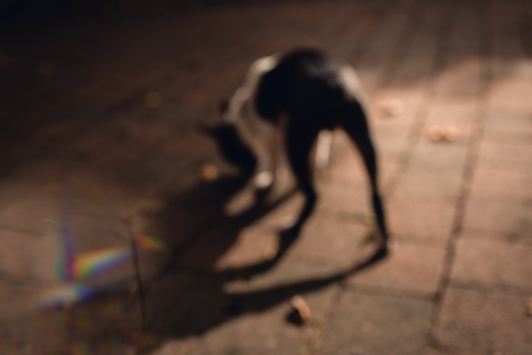 out of focus dog image created with a prism by megan cieloha