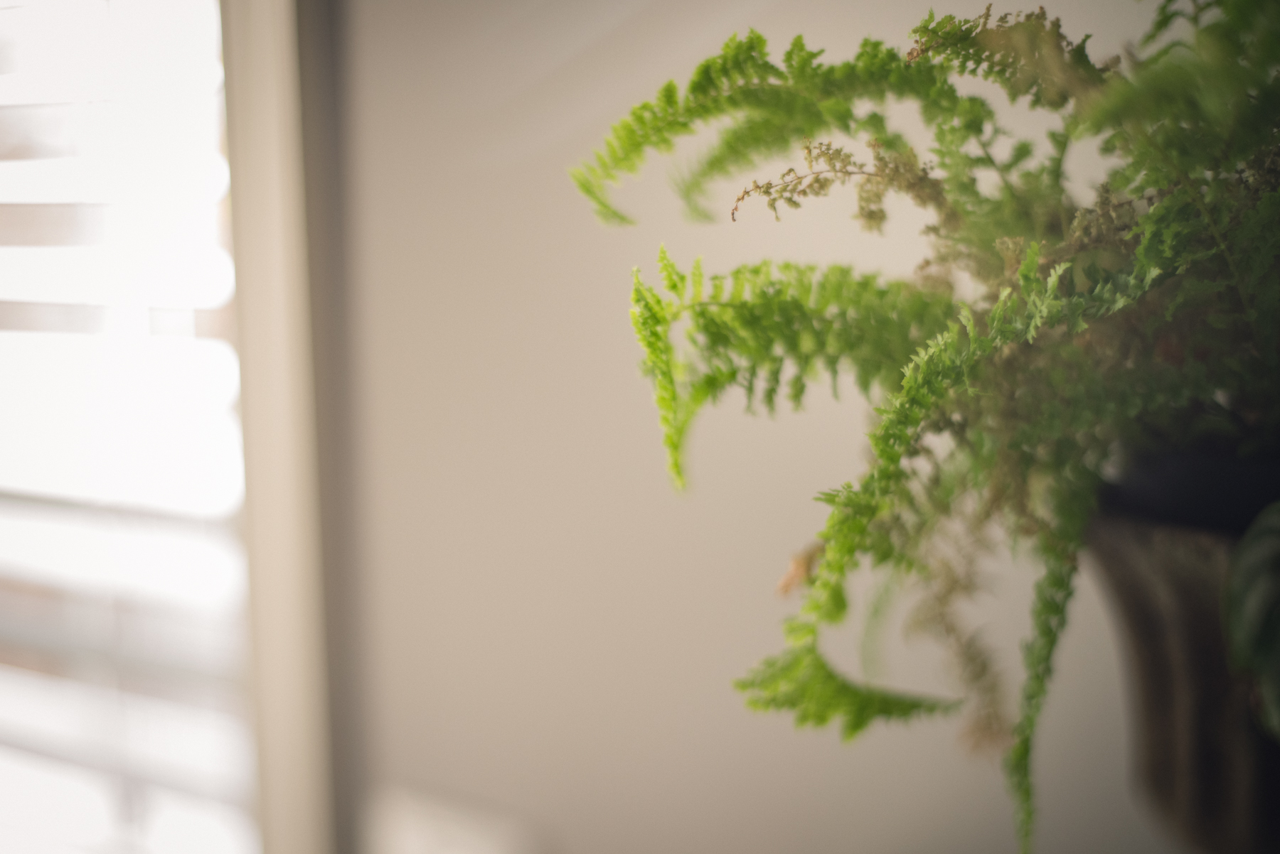 photo of fern freelensed in indoor natural light by megan cieloha