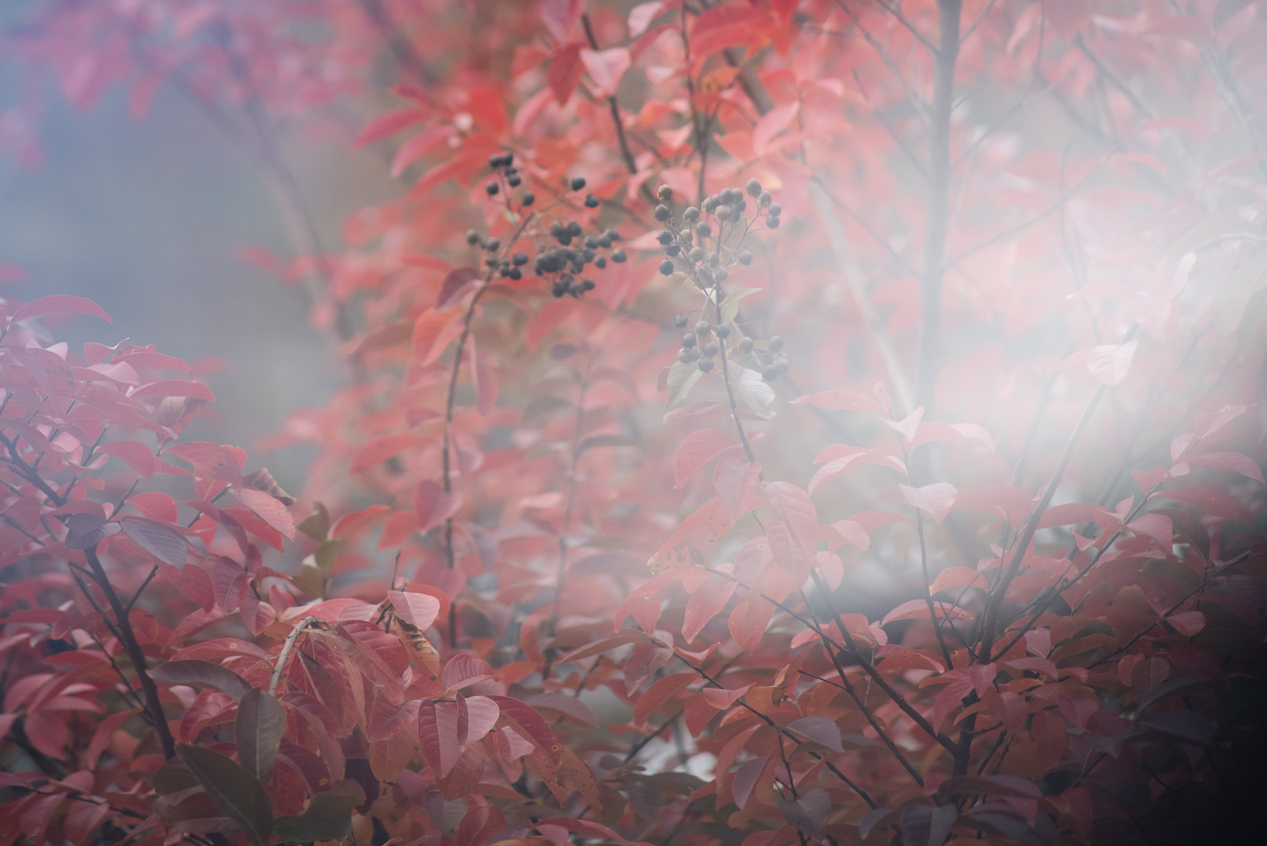 freelensed photo of red fall foliage by megan cieloha