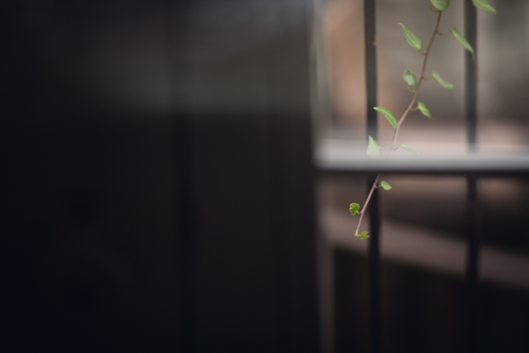 freelensed photo shot through window of ivy by megan cieloha