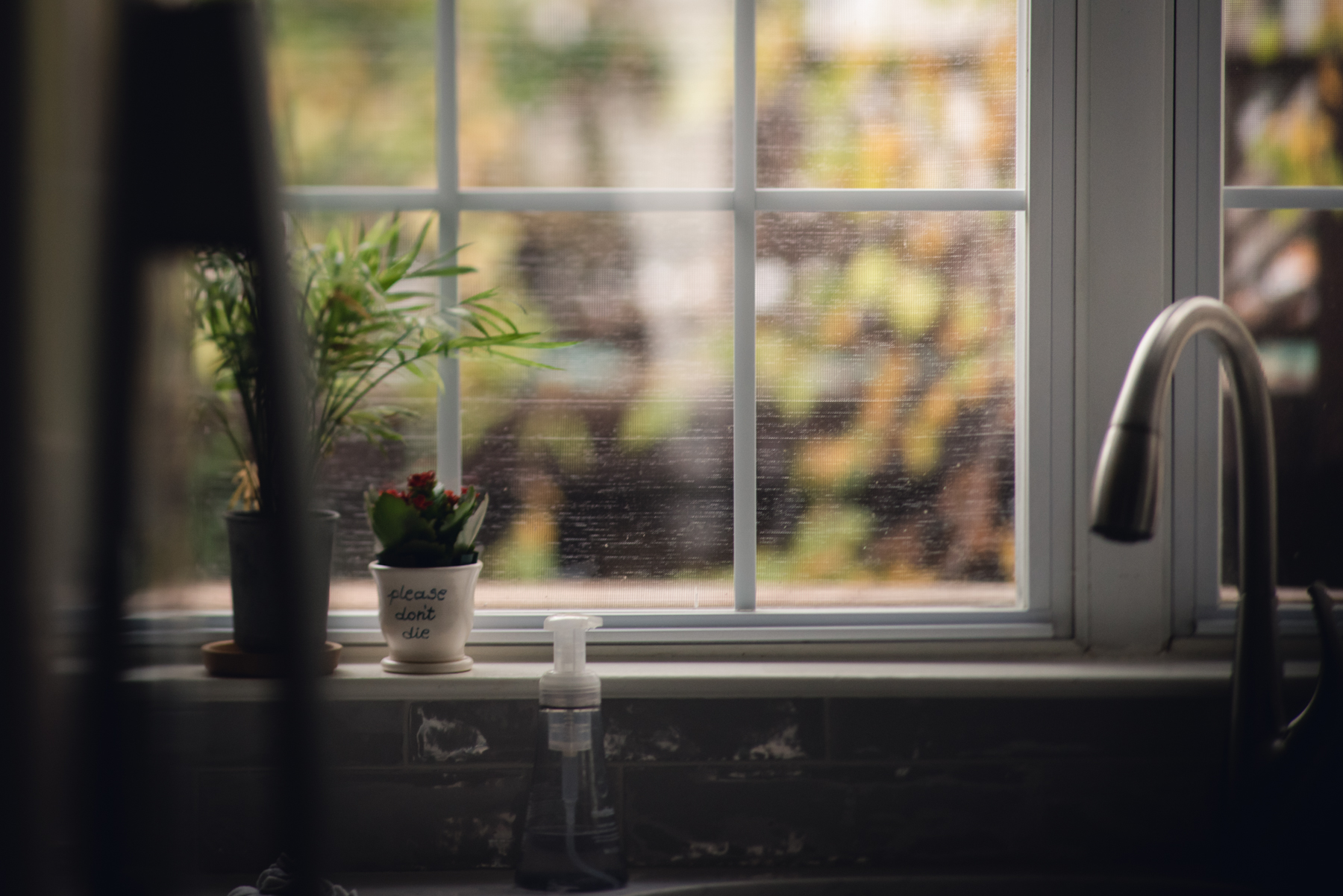 freelensed picture of kitchen window by megan cieloha